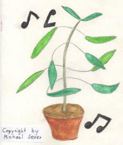 Zimmerpflanze-034-Codariocalyx-motorius-034-die-Tanzpflanze-bewegt-sich-zu-Musik