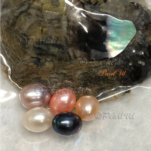 Individually Wrapped USA Akoya Oysters Each With 6-10mm Unicorn Pearl