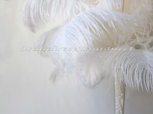 """100 Piece Set White Ostrich Feathers for Wedding Birthday Centerpiece 8""""-24"""""""