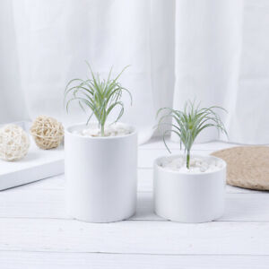 Artificial-Pineapple-Grass-Air-Plant-Fake-Floral-As-Home-Wall-Decoration-Gree-Kc
