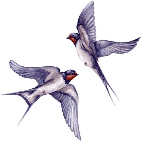 Aq07 estribo imagen perchas transferencia aufbügler Schwalbe acuarela pájaro a4 a5 todas las sustancias