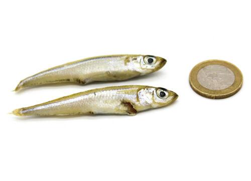 Ostsee Stinte 1kg Gefrorene Köderfische Futterfische Hering Sandaal Sprotten