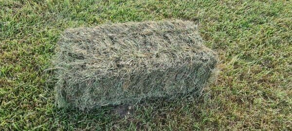 Square Grass Bales