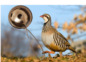 Richiamo per PERNICE e uccelli da caccia a fiato