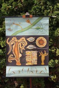 Carte-a-Rouler-Schulwandkarte-Murale-Hydra-Tableau-D-039-Apprentissage-Schulkarte