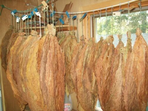 hq viable  seeds* most popular tobacco *VIRGINIA  GOLD TOBACCO 4000 Best