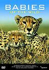 Babies Of The Wild (DVD, 2006)