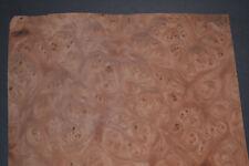 Elm Burl Raw Wood Veneer Sheet 85 X 14 Inches 142nd 8628 23