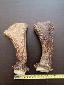 Details about 2 x Moose Antler Pieces Cuts Templates For Handles Souvenirs  Decorations # 4530