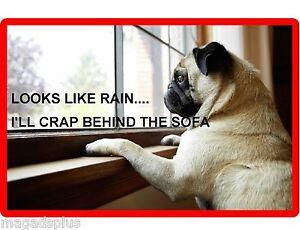 Funny Fawn Pug Dog Rainy Day Refrigerator Tool Box Magnet Gift