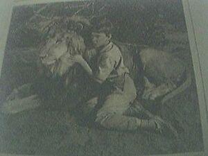 magazine-picture-1961-kenya-the-lion-pamela-franklin
