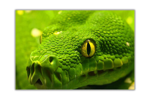 Green Anaconda Wild Animal Posters Home Decoration Prints Premium Gloss