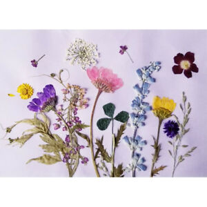 12Pack-Natural-Real-Pressed-Dried-Flowers-for-DIY-Craft-Bookmark-Card-Making