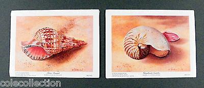 Pair of Small Seashell Prints by Artist Waltraud Fuchs Von Schwarzbek, 6 x 8 in