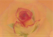 """Lentikular -Wackelkarte: Orange Rose """"Birdy"""" blüht auf - """"Birdy"""" Rose"""