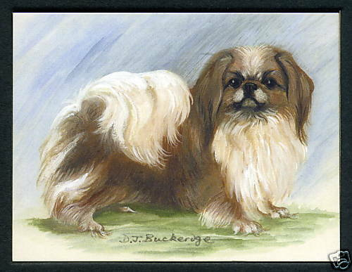 Crufts Kennel Club Toy Group Six Collectors Card Set PEKINGESE Dog Breeds