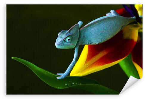 Poster 0196 Postereck Chamaeleon Tier Natur Farben Bunt Dschungel Eidechse