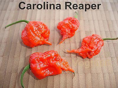 15 Orange longtail Scorpion Chili graines jusqu /'à 1,2 millions d/'Scoville
