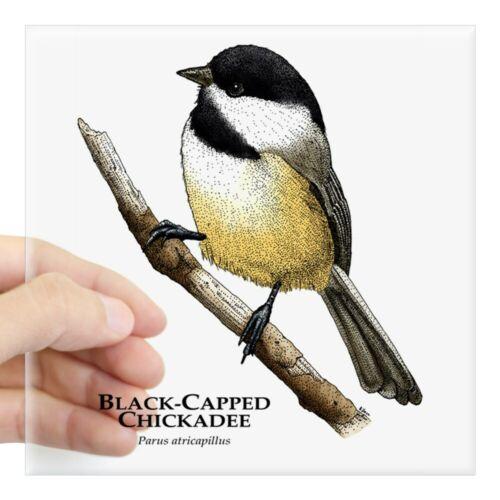 CafePress Black/_Capped/_Chickadee Square Sticker 1446895372