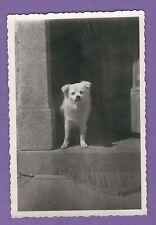 17/176 FOTO HUND AN HAUSTÜR - WACHHUND - ATELIER OPTIKER KRILLE SCHWERIN