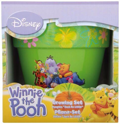 Süßes Disney Winnie the Pooh  Pflanz Set Kürbis 2459