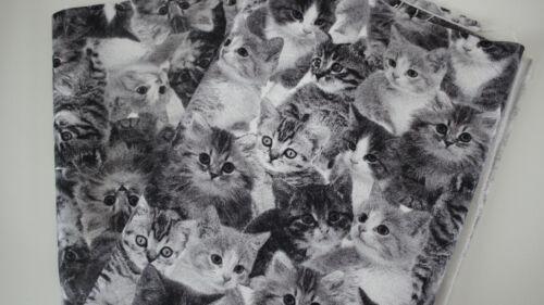 50 x 1,40 Kätzchen auf grau II Canvas-Stoff