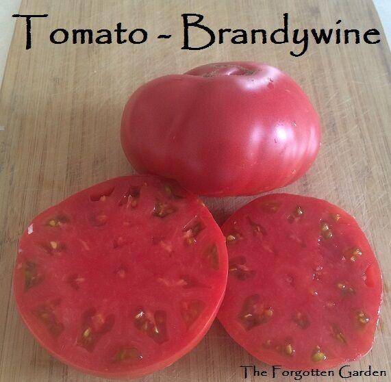 Tomato Seed Brandywine 100 Seeds Heirloom Vegetable Garden Vine Indeterminate