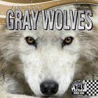 Gray Wolves by Sheila Griffin Llanas (Hardback, 2013)