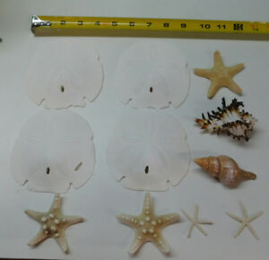 Mixed Starfish Sanddollar Dried Sea life Shells Craft collector Decor # 37L