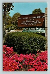 Chrome-View-of-Los-Angeles-State-Arboretum-Flowers-Arcadia-CA-Postcard-X26