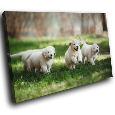White Labrador Puppy Green Funky Animal Canvas Wall Art Large Picture Print