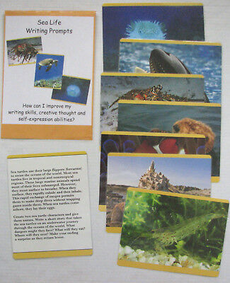 Educational Learning Writing Resources Writing Prompts Grades 4-6 Sharks