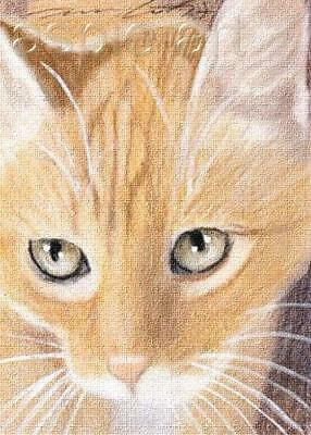ACEO print limited edition white cat by Anna Hoff
