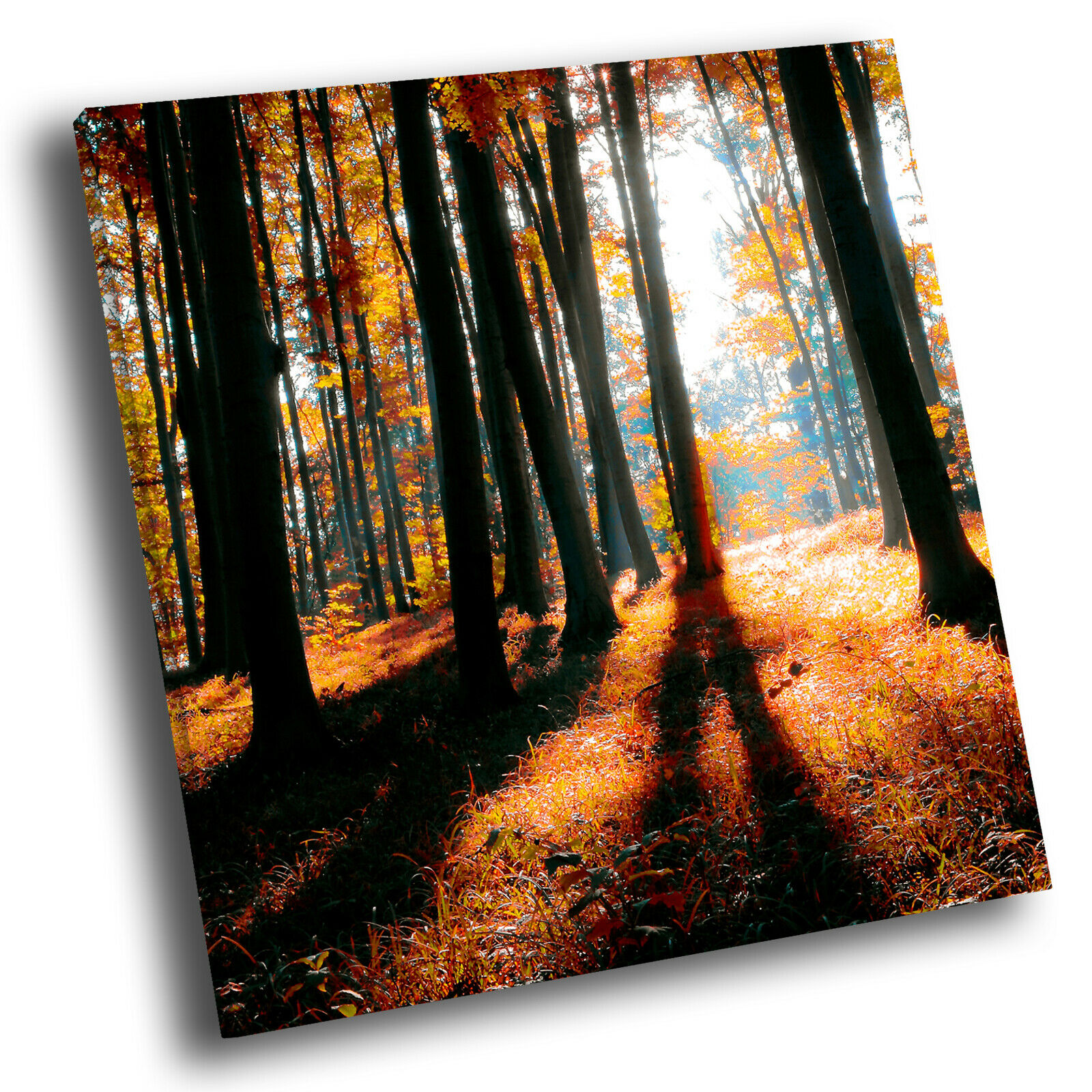 Autumn Orange Forest Nature Square Scenic Canvas Wall Art Large Picture Print