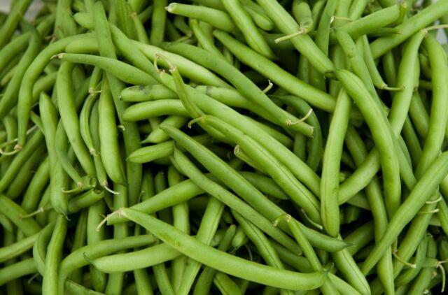 Kentucky Wonder Bush Green Beans Fresh Seed  FREE Shipping Green Bean Seed
