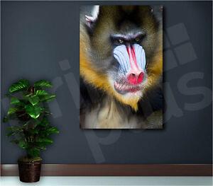 Mandrill Canvas Wall Art Monkey Canvas Art Monkey Wall Art Mandrill Photo Monkey Poster Animal Wall Art Animal Decor Monkey Wall Decor Print