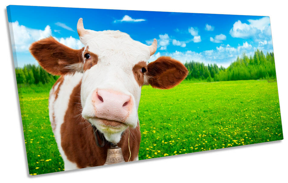 Cow Face Farm  PANORAMA CANVAS WALL ART Picture Print