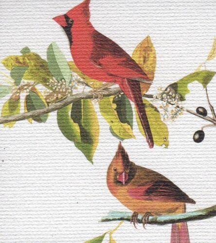 "AUDUBON BIRDS /""CARDINAL MALE /& FEMALE/"" STUNNING RED BIRD Color Art CANVAS MAGNET"