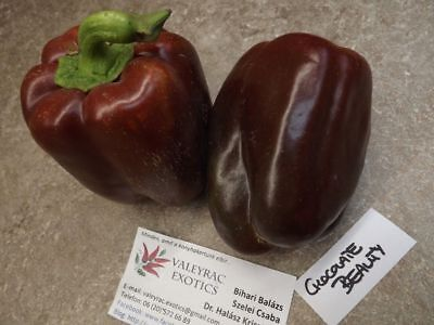 15 Seeds- Heirloom- Non Sweet Vegetable GMO Bell Pepper Chocolate Beauty