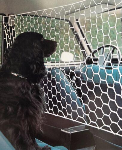 Universal Pet Safety Net Car Suv Van Seat Mesh Dog Barrier Travel White 110x65cm