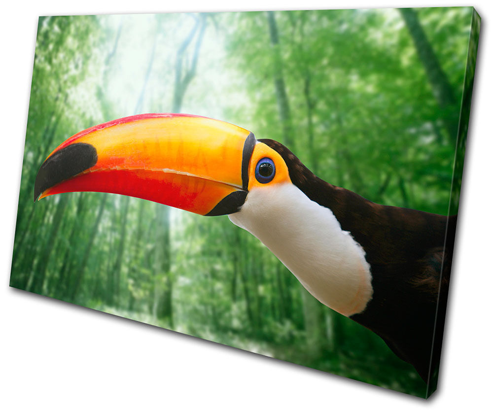 Animals Toucan Bird SINGLE Leinwand Wand Kunst Bild drucken