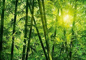 Carta Da Parati Foresta Tropicale : Wall mural photo wallpaper 366x254cm jungle feature wall palms rain