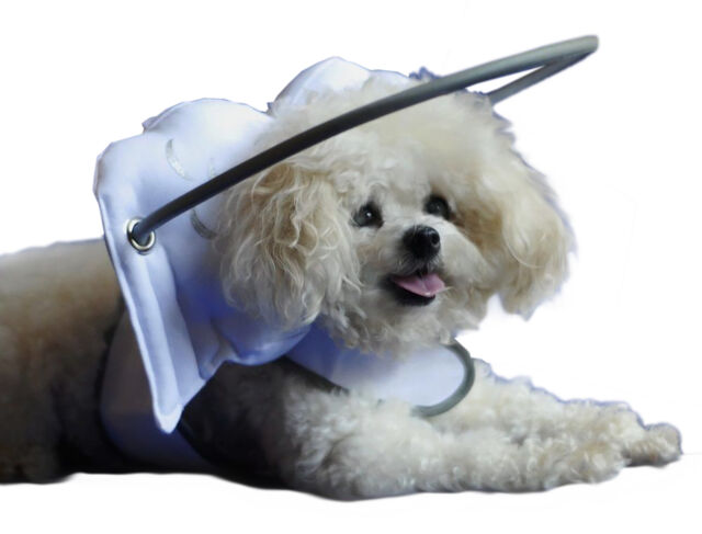 Halo Blind Dog Harness Guide Device