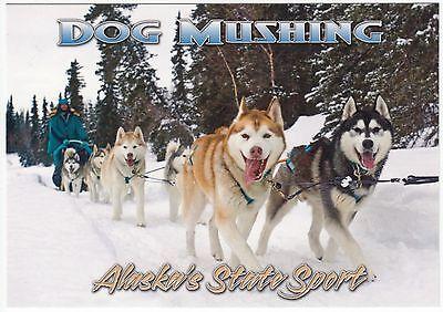 Postcard Siberian Husky Sled Dogs in 2008 Iditarod Race in Alaska