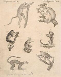 Friedrich-Justin-Bertuch-neun-Darstellungen-aus-034-Bilderbuch-fuer-Kinder-034-1790-18