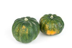 Giant-hull-less-squash-034-Olga-034-15-seeds