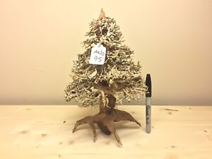 image is loading xmas bonsai driftwood christmas tree aquarium aquascape moss