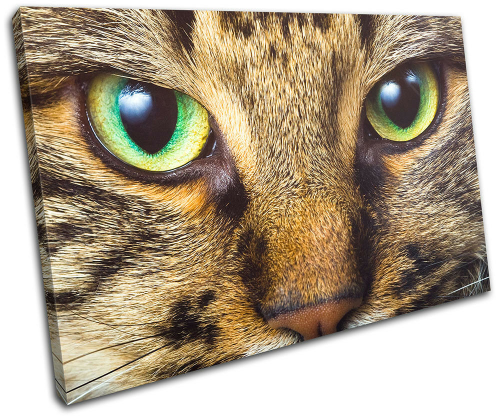 Cat Face Eyes Cute Cute Cute Pet Tabby Animals SINGLE TELA parete arte foto stampa 3d3081