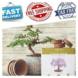 Nature S Blossom Bonsai Tree Kit Grow 4 Types Of Miniature Trees From Seed 646223852899 Ebay