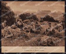 orig. Bufa-Foto 1. Weltkrieg Flachsernte Lys Kortrijk Gent Belgien Bauern 1918